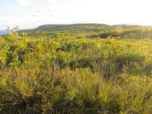 Heathland at Brahminy Campsite on the Cooloola Great Walk