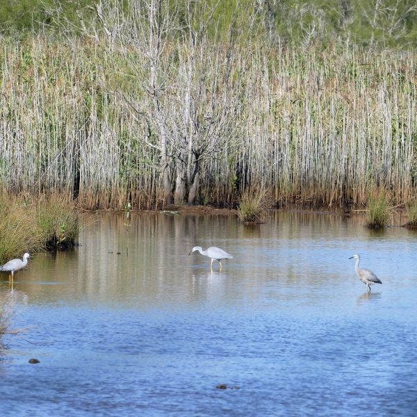 Yandina wetlands
